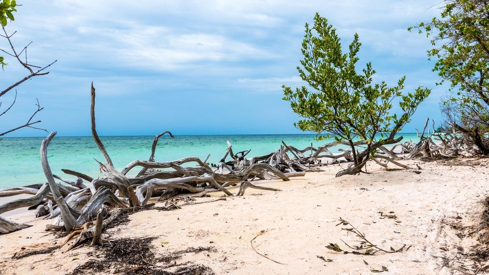 Корни мангровых деревьев на пляже острова Кайо Хутиас