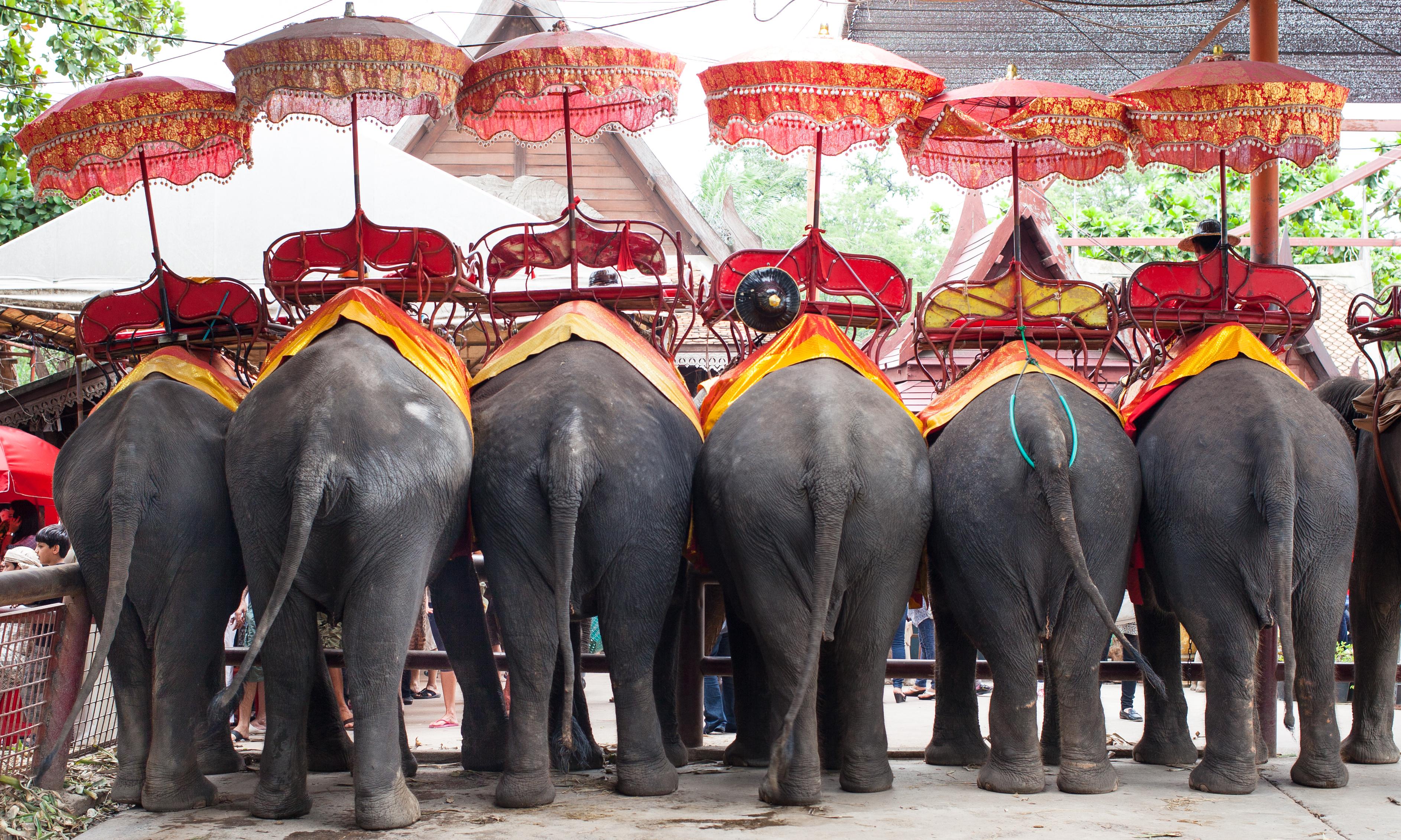 День тайского слона