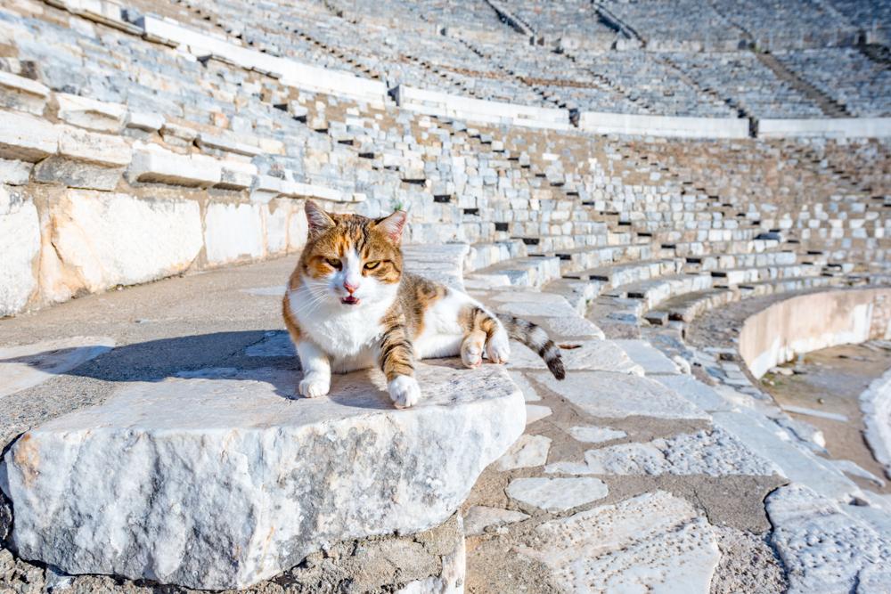 Турецкие коты — популярные объекты для фото