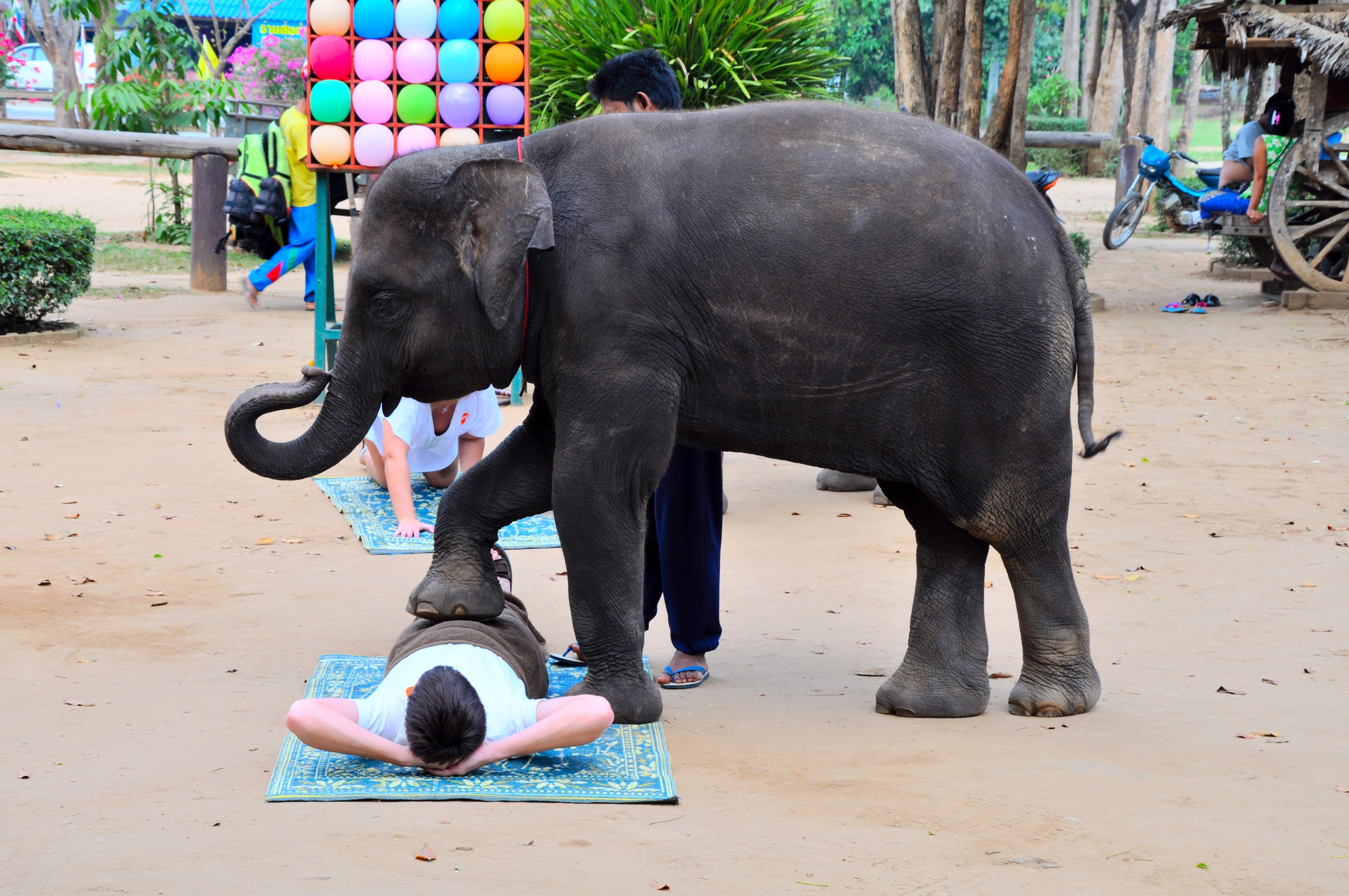 Турист пробует массаж у слона