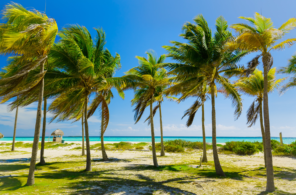 Пальмы наКайо-Коко