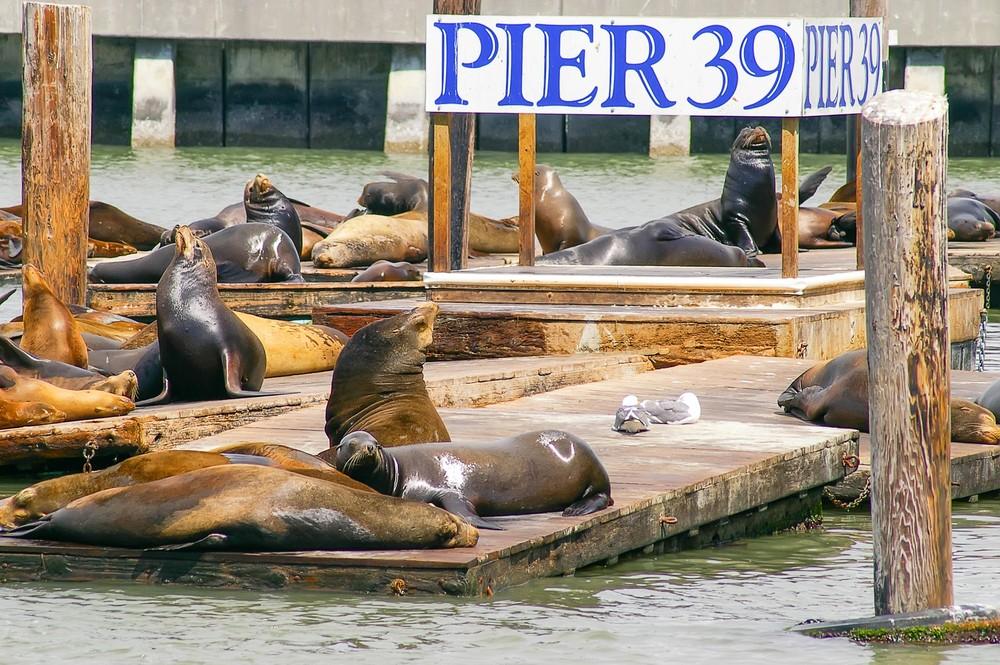 Пирс 39, Сан-Франциско