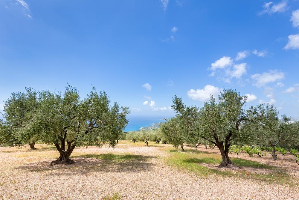 Оливковая Роща, Каламата, Греция