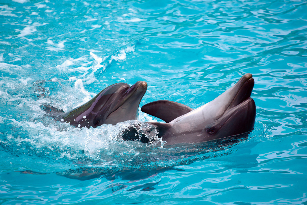 Дельфинарий, Сочи