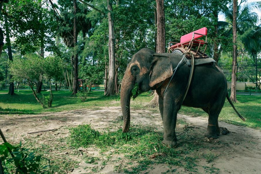 Катание на слоне на Пхукете